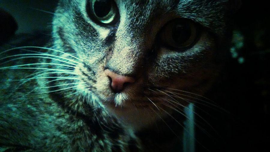 Tabitha Cat Taking Photos Kitty!