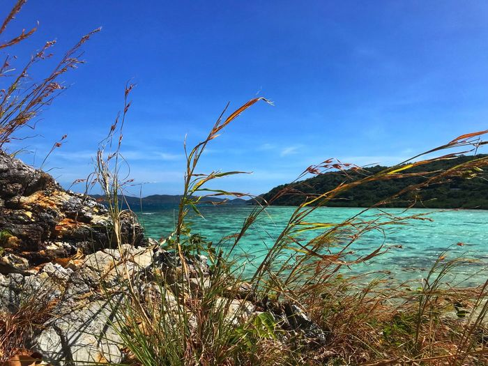 One of the best islands Coron, Palawan Sea Beauty In Nature Nature Blue Sky Beach Water Plant Grass IPhoneography
