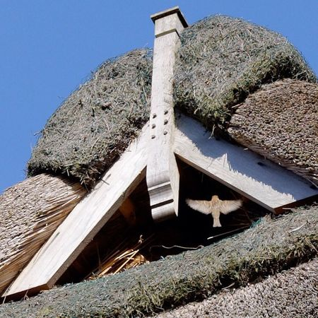 clear for landing :) Sparrow Sky Thatched Roof thatchedroof spatz reetdach himmel bird