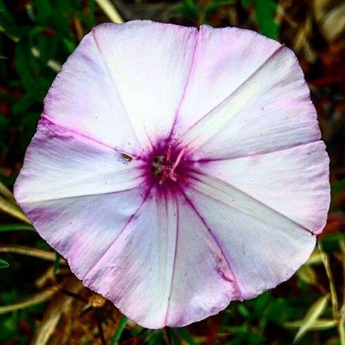 Photography Naturalflower Madeira Island Visitmadeira Flower