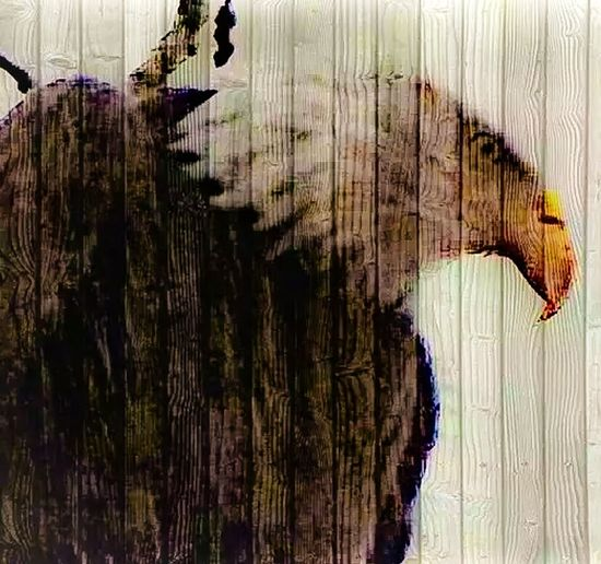 The Innovator Eagles Check This Out Photos Around You Arlington  Arlington, Wa Showcase June June 2016 Fine Art Photography Outdoor Photography Eyeem Photography Eyeem Photo Color Eyeem Best Shots Eyeem Gallery Interesting Perspectives