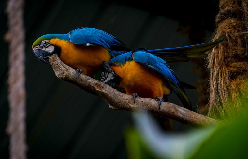 Macaw Bird Tree