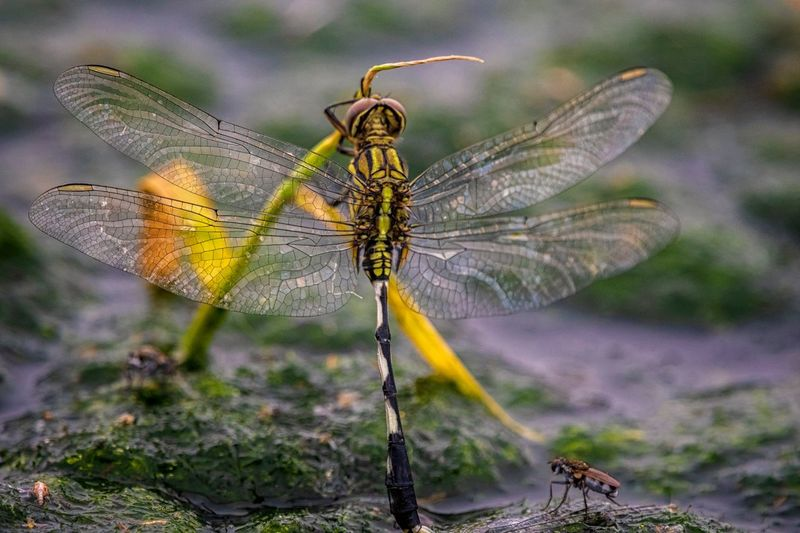 Water Dragonfly Animal Themes Insect Invertebrate Animal One Animal Animal Wildlife Animals In The Wild Close-up Animal Wing Focus On Foreground Dragonfly Nature No People Plant Beauty In Nature Fragility Animal Body Part