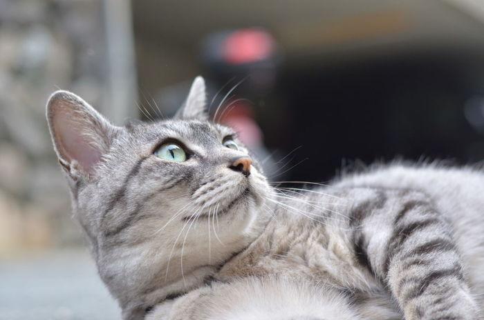 風が....止まったにゃ Cat Mycat KAWAII ダンディ