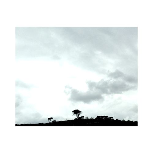 mini trees Minimalism Perspectives Near And Far Tree Portrait