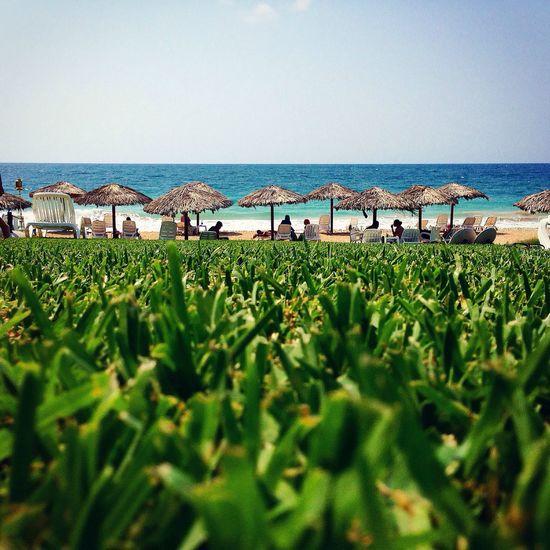 Beach Grass Sea Blue Sky