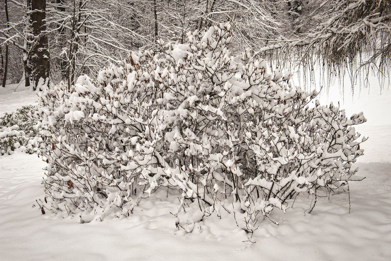 Snow covered trees on field in forest
