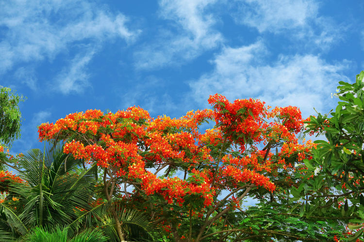 Low angle view of orange flowering plants against sky