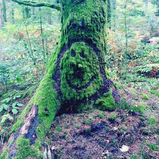 Tree Nature Woods Forest Photography Smile Enchanted Forest