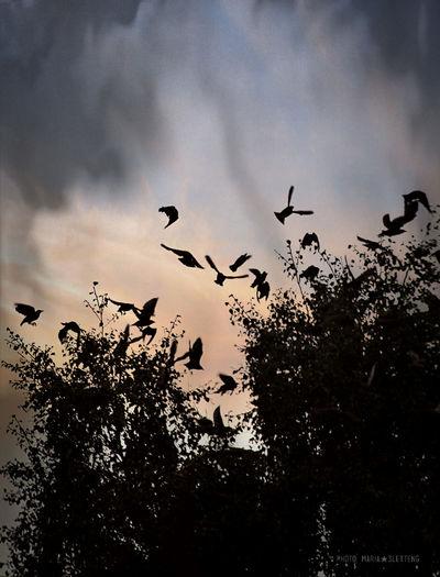 Birds Bird Birds Flying Tree With Birds Tree Silhouette Birds Silhouette Fåglar Fågel Siluett Träd Siluett Nature Photography Natur Sky