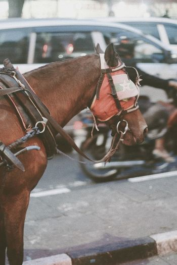 Animal Themes Bridle Close-up Day Domestic Animals Horse Horse Cart Livestock Mammal No People One Animal Outdoors