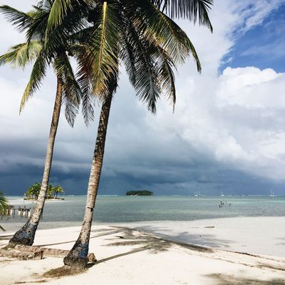 Tropical beach scenery in Panama. San Blas Square Beach Beauty In Nature Cloud - Sky Day Growth Horizon Over Water IPhoneography Mobile Photography Nature No People Outdoors Palm Tree Sand Scenics Sea Shore Sky Tranquil Scene Tranquility Travel Destinations Tree Tree Trunk Water