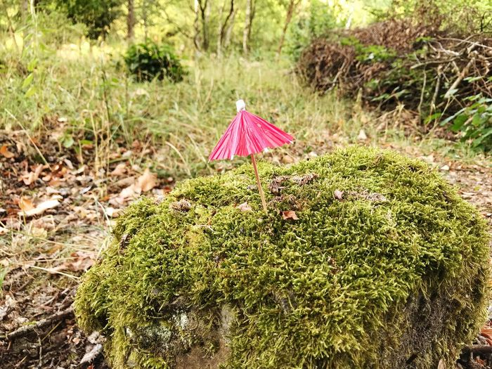 Moss Miniature Parasol Umbrella Plant Land Nature No People Field Day Grass Green Color Outdoors Focus On Foreground Beauty In Nature