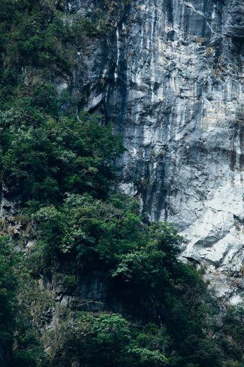 Plant Rock Rock