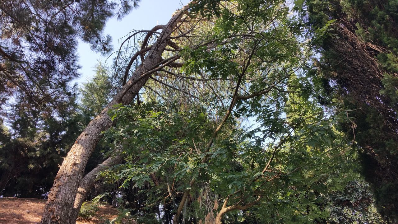 tree, nature, growth, day, forest, low angle view, branch, outdoors, no people, beauty in nature, tree trunk, scenics, sky, water