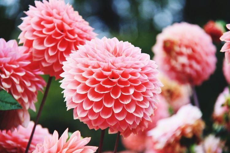 Flowering Plant Flower Fragility Plant Vulnerability  Freshness Inflorescence