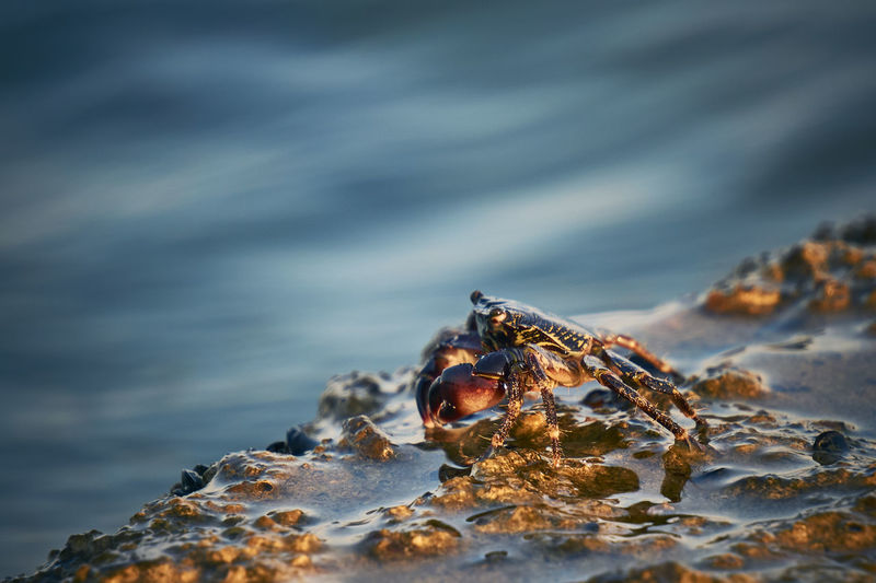 Copy Space Animal Animal Eye Animal Themes Animal Wildlife Animals In The Wild Close-up Crab Day Insect Invertebrate Marine Nature No People One Animal Outdoors Rock Rock - Object Sea Sea Life Selective Focus Solid Sunset Water Capture Tomorrow