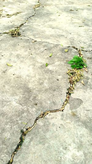 Concretevsnature Ambientism Cracked Day Nature Footpath Tranquility