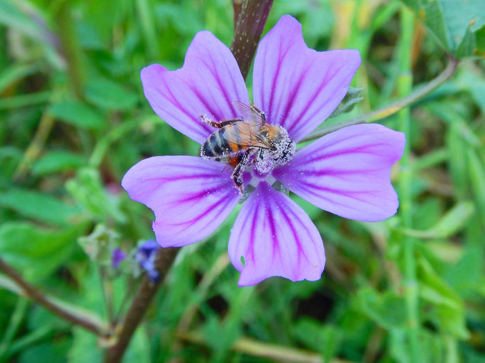 Beauty In Nature Day Flower Focus On Foreground Fragility Freshness Insect Outdoors Petal Plant Pollen Pollination Purple Wildlife