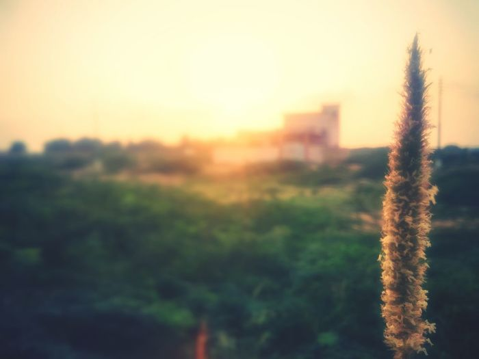 A piece of art. Colour Of Life Sunset_captures Sunrays Elegant Green Nature Scenery💋 First Eyeem Photo