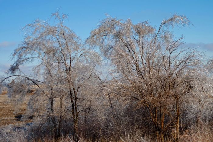 Visual Journal January 17, 2017 Western, Nebraska - January 2017 Ice Storm : The Melting A Day In The Life Beauty In Nature Canon FD 50mm F/1.8 Extreme Weather Eye For Photography EyeEm Best Shots EyeEm Gallery FUJIFILM X-T1 Icicles Low Angle View MidWest My Neighborhood Nebraska Weather No People Photo Diary Photo Essay Photography Rural America Series Small Town America Small Town Stories Storytelling Visual Journal Winter_collection Wintertime