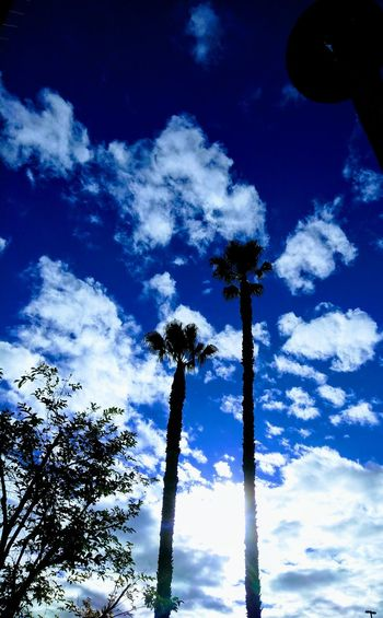 Sunny Southern California so-cal Palm Trees palms Palm Trees