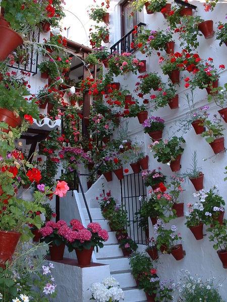 Cordoba Spain Flowers No People Patios De Córdoba