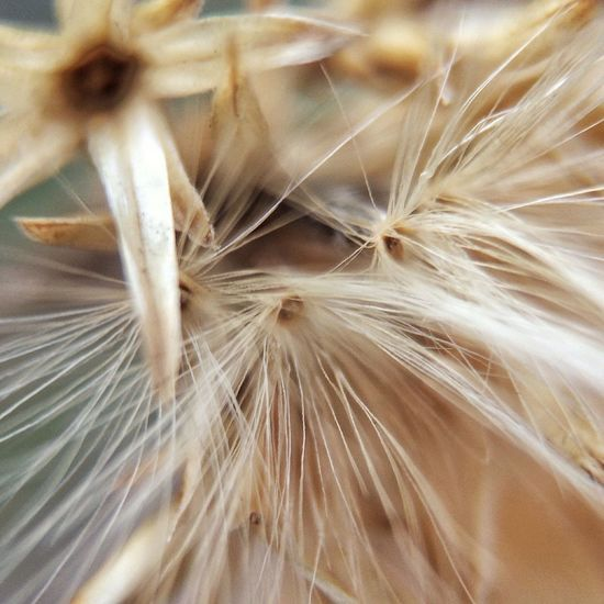 Extreme close up of flower head