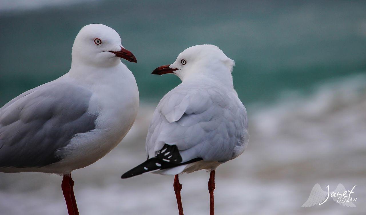 CLOSE-UP OF SEAGULLS PERCHING ON A BIRD
