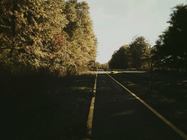Village Photography Drive&shot Drive Home Drive Way Trees Vintage Fall Colors Fall Style Walking Alone