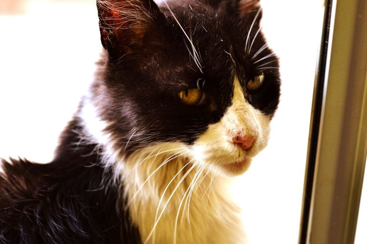 su mirada refleja la mia ...I Love My Cat Cat Eyes Petslovers Pet Photography  Negri Miau GRRRRRRR! Cute Pet