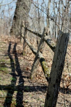 Fence Shadow Wooded