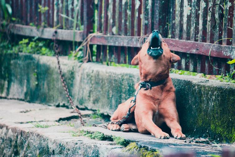 Dog sitting in a fence