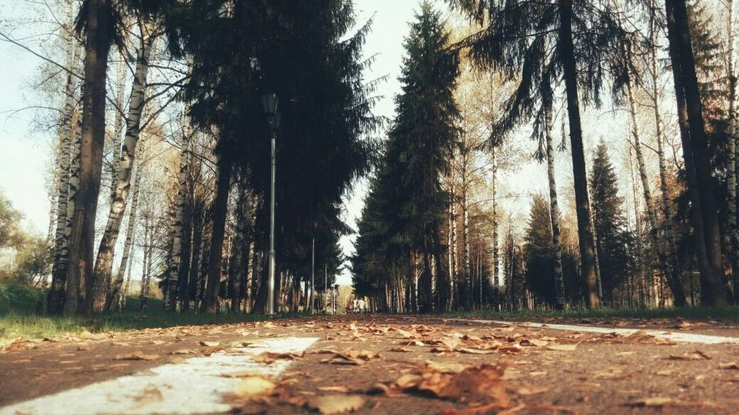 фон осень Tree Forest Nature The Way Forward Tranquility Day Beauty In Nature Shades Of Winter