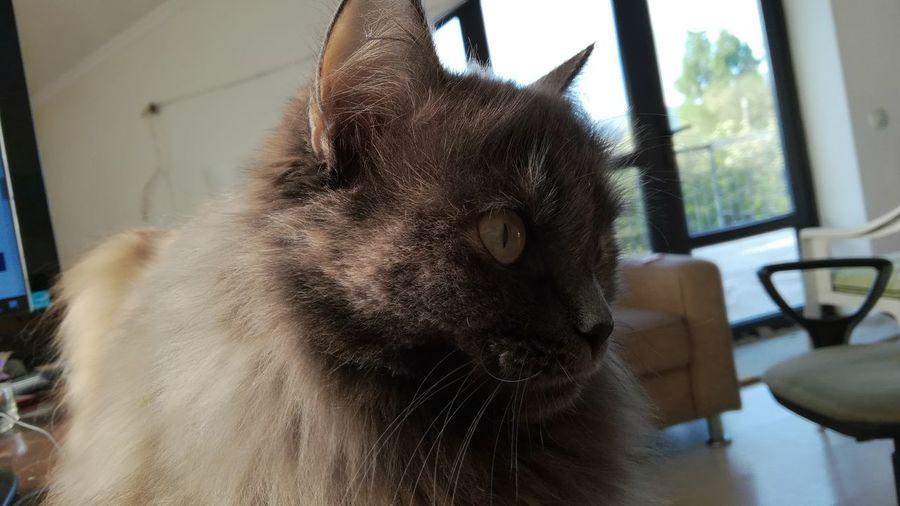 Barbra the Cat