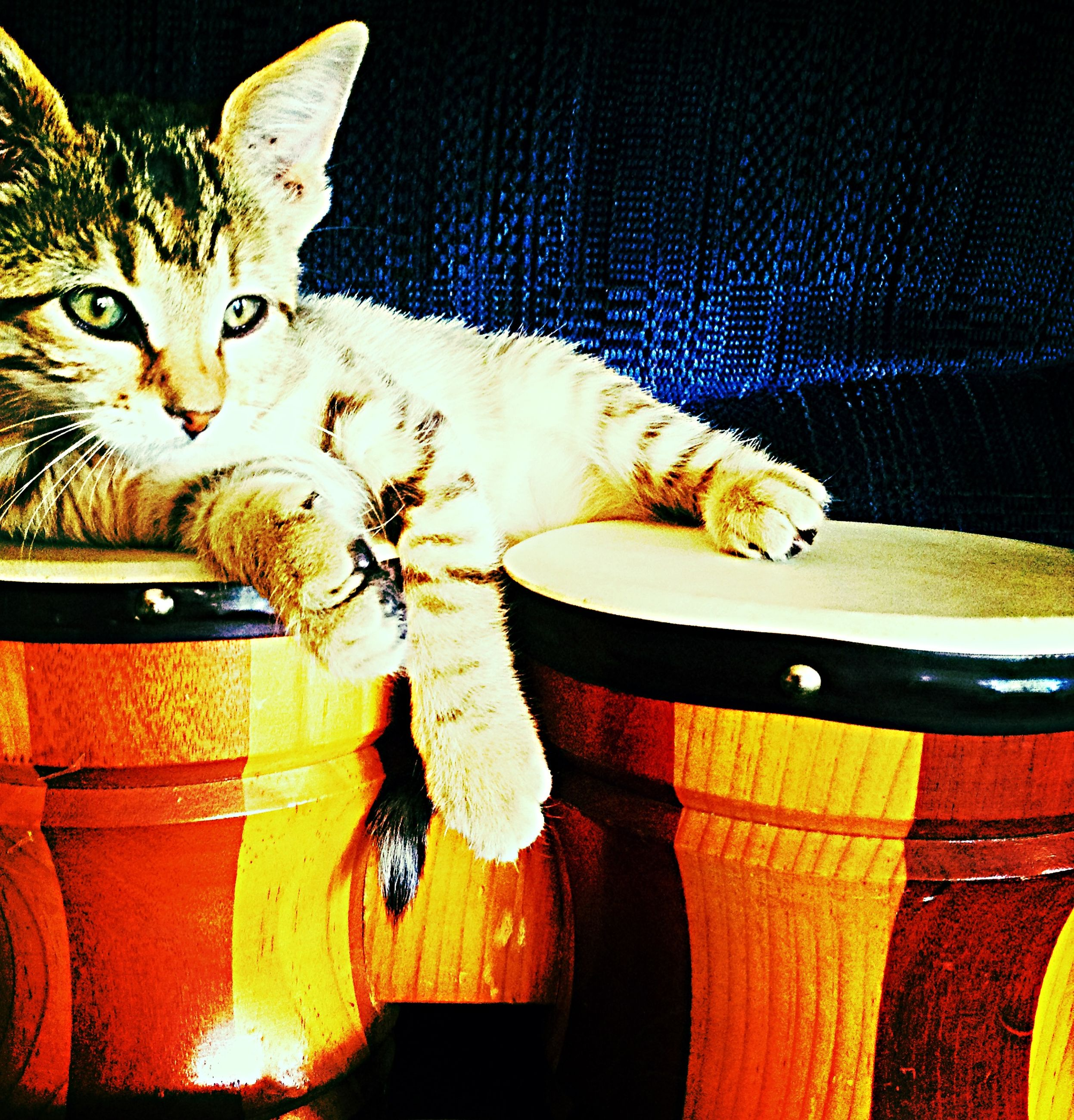 domestic cat, domestic animals, cat, pets, animal themes, mammal, feline, one animal, indoors, whisker, looking at camera, portrait, relaxation, animal representation, two animals, no people, lying down, resting, home interior, table