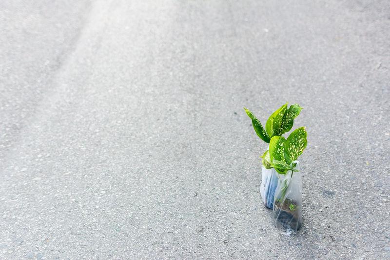 High Angle View Of Plants On Street