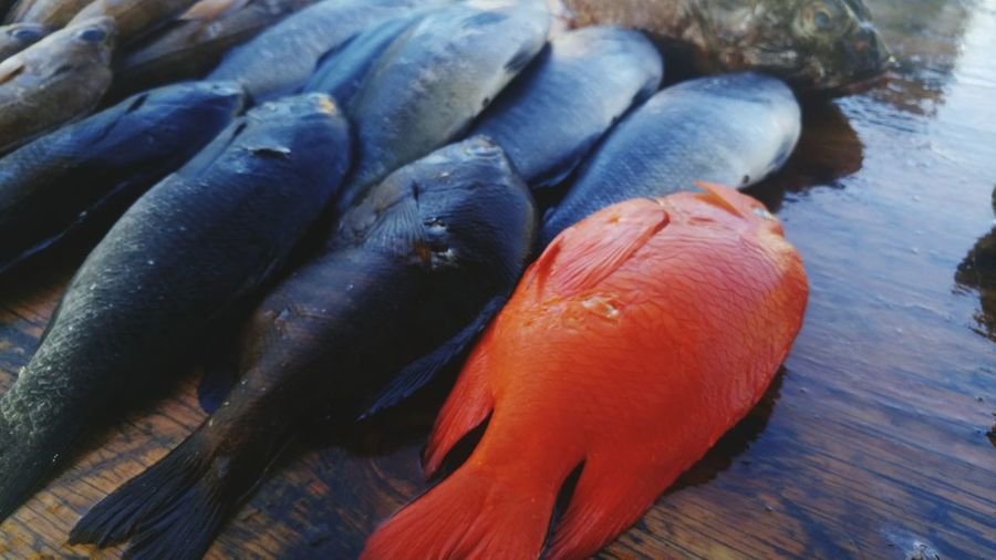 High angle view of red fish amidst black seafood at market stall