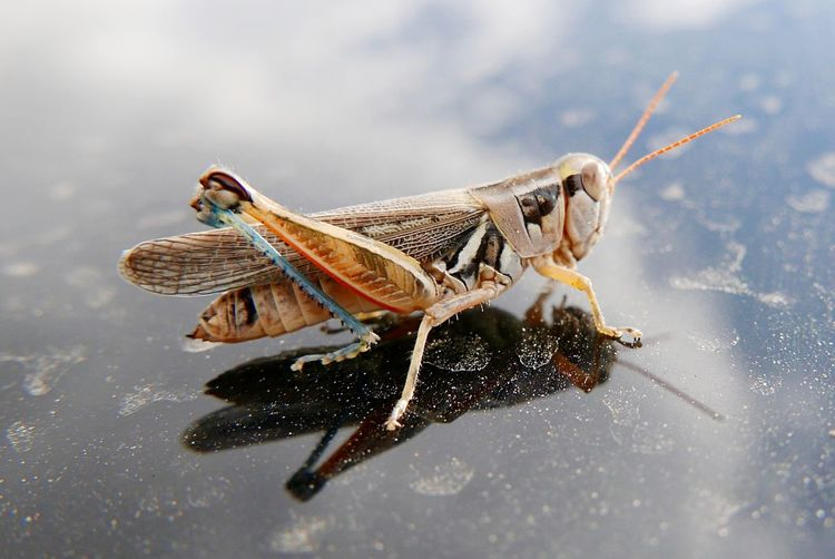 Animal Themes Animal Animal Wildlife Animals In The Wild One Animal Invertebrate Insect Close-up No People Nature Day Grasshopper Water Animal Body Part Outdoors Side View Focus On Foreground Full Length