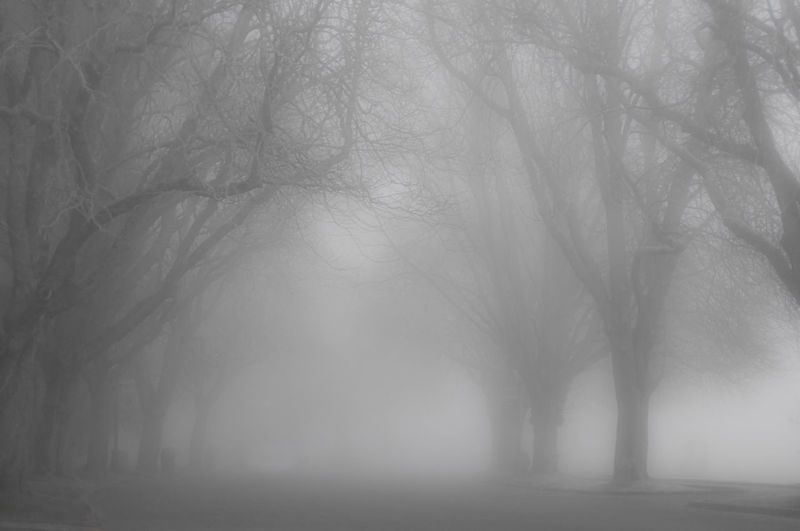 Untitled B&w Photography Bare Tree Beauty In Nature Branch Day Fog Nature No People Outdoors Soft Contrast Tranquility Tree