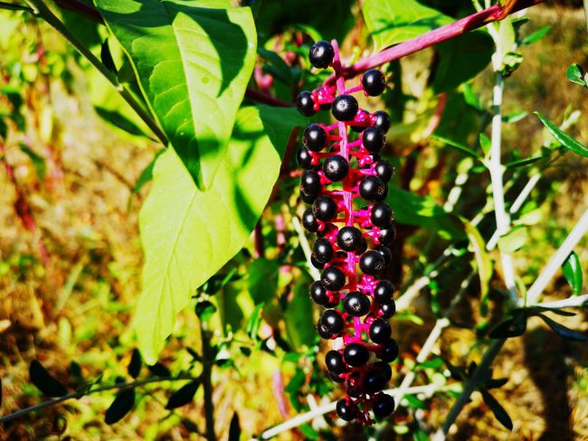 Tree Fruit Leaf Red Branch Close-up Plant Green Color Berry