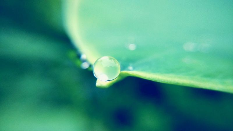 Macro Photography After The Rain Hydrophobic Leaf🍂