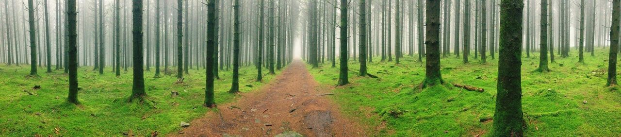 Nature Forest Wood Moss Tree Foggy Hanging Out Landscape Scenics Tranquil Scene Green