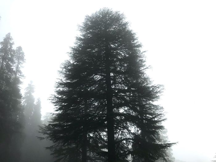 Foggy Foggy Day Foggy Landscape Foggy Morning Tree In Fog Tree Plant Low Angle View Sky Nature No People Growth