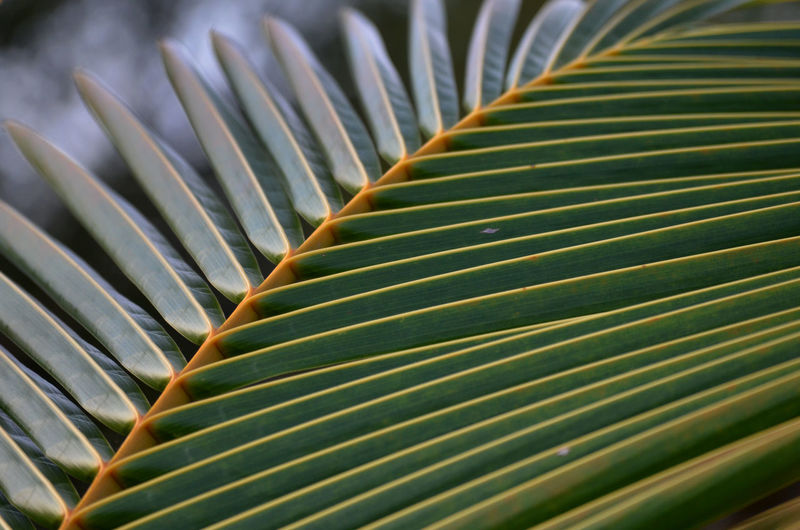 Beauty In Nature Close-up Day Detail Green Color Leaf Nature Nikon D5100  Outdoors Palm Leaf Palm Tree Pattern Plant Selective Focus Tree