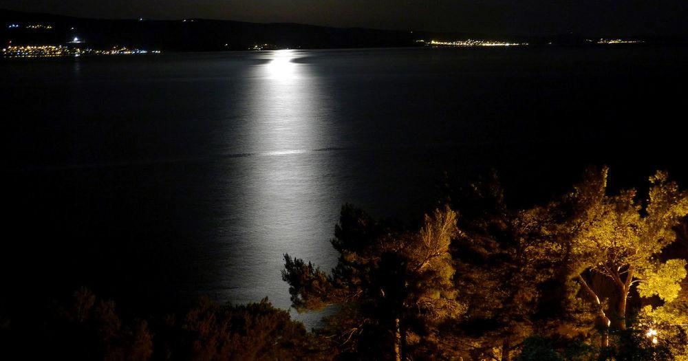 Illuminated trees by sea against sky at night