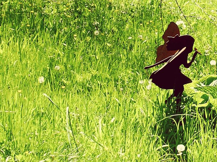Green Color Grass Nature Growth Outdoors No People Field Beauty In Nature Day Metal Art Greenery Green Nature Green Grass Green Leaves Arts Naturelovers Outdoor Photography Fairy Fairy Metal Art Fairy Meadows Fairy World Fairyland Grass Flowers Grassyfield