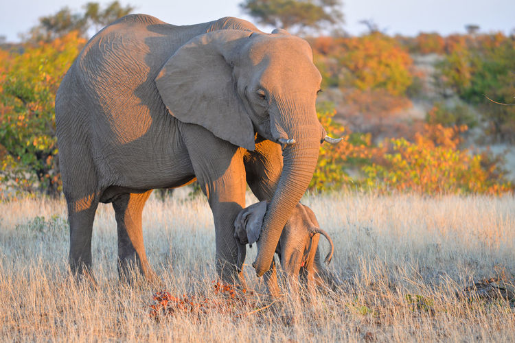 Elephant and calf standing on land