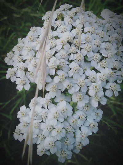 Flowers 🍃🍃🌸