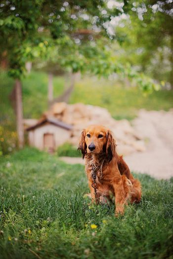 Close-Up Of Dog Sitting On Grass Field